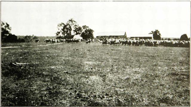 Figure 4: Ongerup Homestead c. 1912